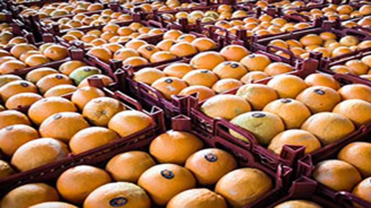 توزیع میوه و کالا های اساسی نوروز